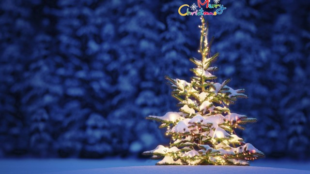 beautiful Christmas tree wallpaper (14)