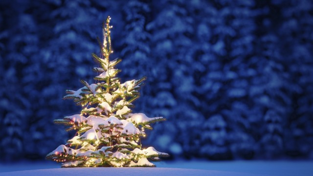 beautiful Christmas tree wallpaper (28)