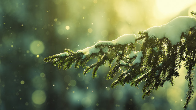 beautiful Christmas tree wallpaper (32)