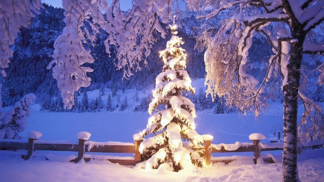 beautiful Christmas tree wallpaper (5)