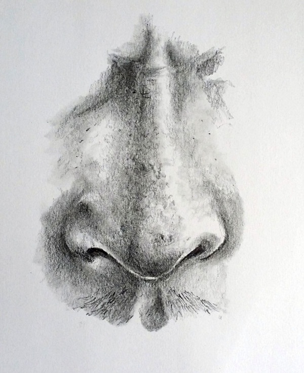 Realistic nose drawing