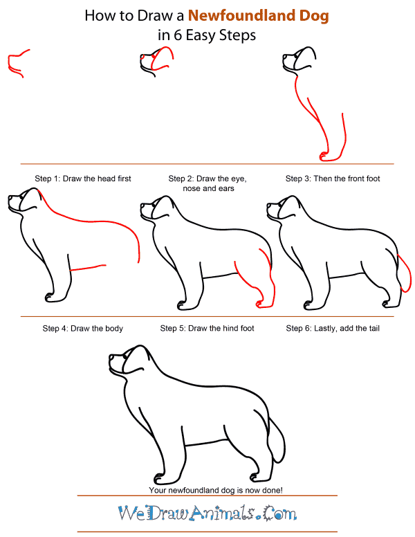 how-to-draw-a-dog-step-by-step-easily