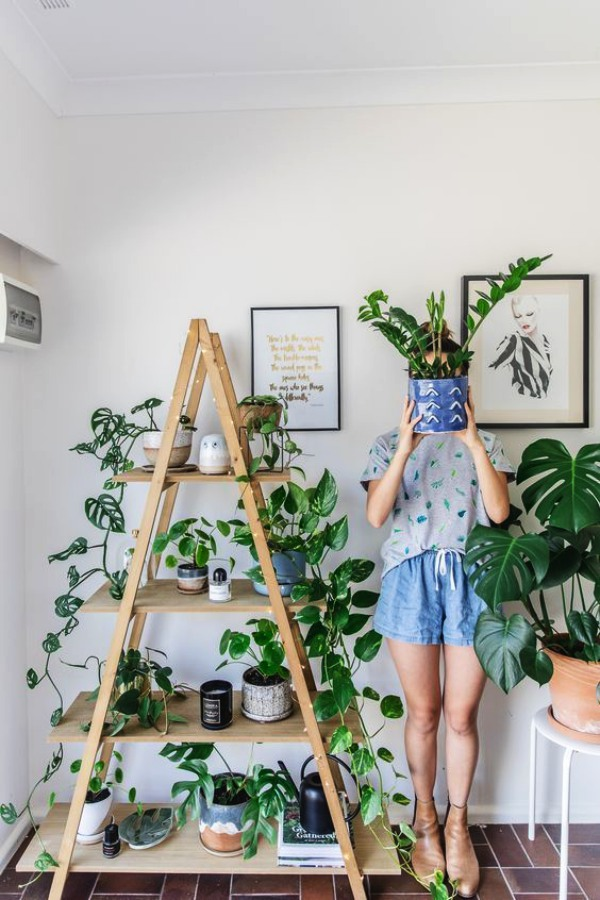 Low Sunlight Indoor Plants For Your Home Decor
